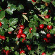Никитский ботанический сад обещает «золотую осень»