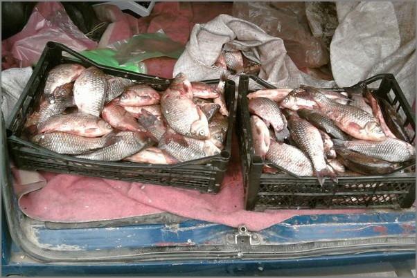 Торговля в Алуште: рыба без документов