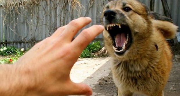 В районе Стройгородка в Ялте собаки загрызли мужчину