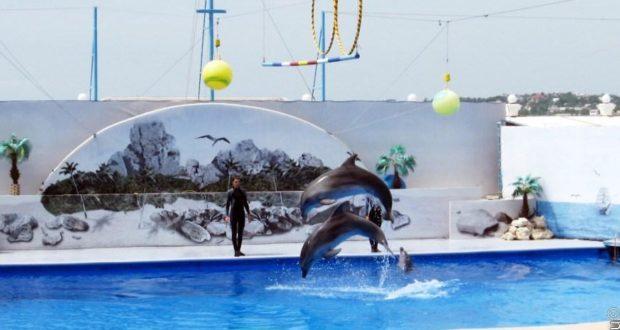 Дельфинарий на набережной Корнилова прекратил работу. Животные выселены