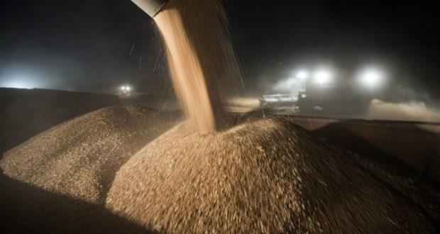 Плохо лежало: в Севастополе из кузовов комбайнов похищены тонны зерна