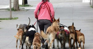 Милосердие – наказуемо. В Алуште суд наказал женщину за… «массовое содержание животных»