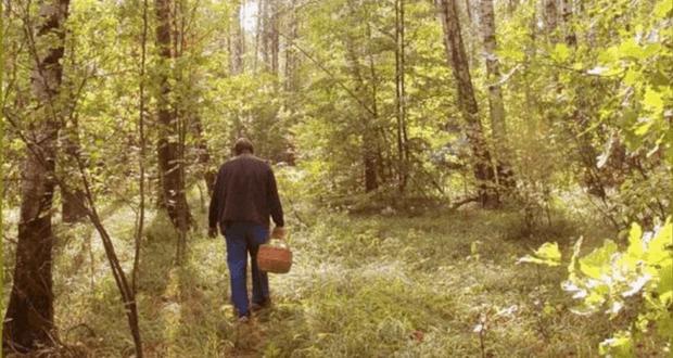 "В Бахчисарайском районе лес ""взял в плен"" очередного грибника. Искали два часа"