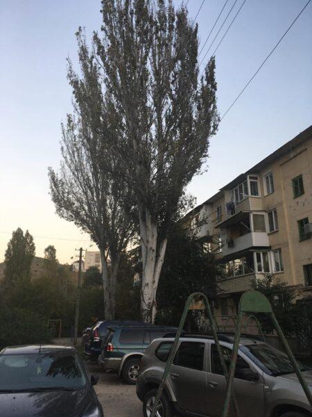 Балаклавцы бьют тревогу: людей пугают аварийные деревья во дворах . «Доброволец» помогает