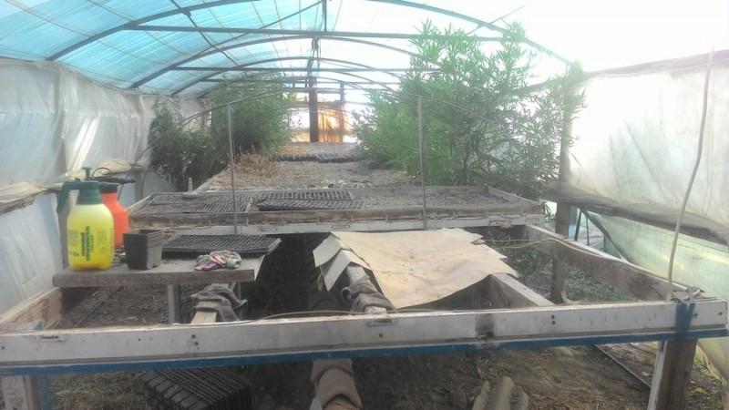 В Нижнегорском районе местный житель устроил теплицу и холил-лелеял коноплю