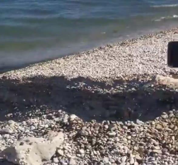 Что же пролилось на пляже в Коктебеле 3 июля